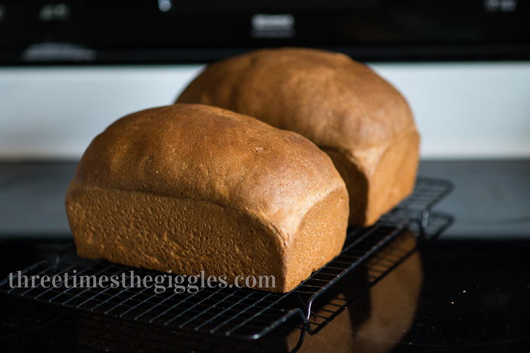Whole Wheat Bread Recipe | threetimesthegiggles.com